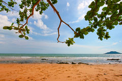 Luxury beach. Tree leaves over luxury beach Royalty Free Stock Images