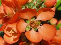 Luxury and bright orange flowers close up. stock photo