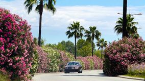 Luxury car driving along road with beautiful bushes and palms, arriving to villa. Stock footage stock image