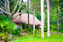 Luxury cottage in the forest under palm trees Royalty Free Stock Image