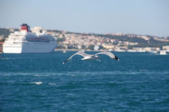 Luxury cruise ship in Bosporus Royalty Free Stock Photography