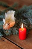 Luxury decoration Christmas birdie Royalty Free Stock Photography