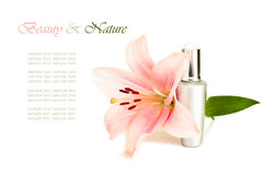Luxury face cream and flower Royalty Free Stock Images