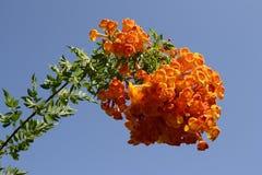 Luxury flowers Royalty Free Stock Photo