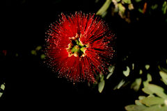 Luxury flowers Stock Photos