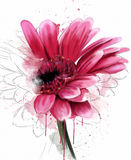 Luxury gerbera  on a white background Royalty Free Stock Photography