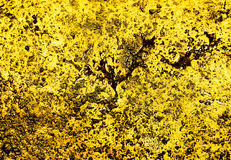 Luxury golden texture Stock Images