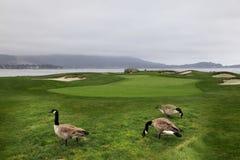 Luxury Golf Stock Images