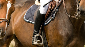 Luxury horseman detail Stock Images
