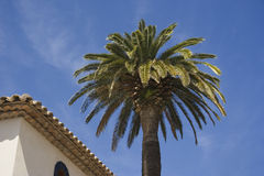 Luxury hotel and a palm tree Royalty Free Stock Photography