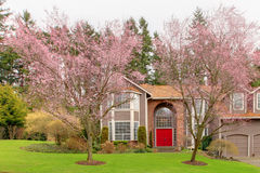 Luxury house with blooming trees Stock Image