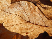 Luxury leaf in sunny rays Royalty Free Stock Photography