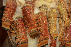 Luxury lobster tail on ice Royalty Free Stock Photo