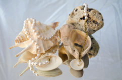 Luxury pearl necklace. A pearl necklace draped over shells and rocks Royalty Free Stock Image