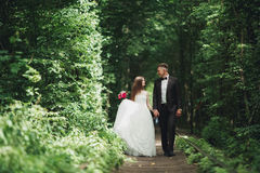 Luxury stylish young bride and groom on the background spring sunny green forest Stock Images
