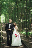 Luxury stylish young bride and groom on the background spring sunny green forest Stock Photography