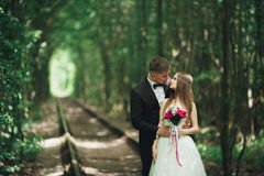 Luxury stylish young bride and groom on the background spring sunny green forest Stock Photos