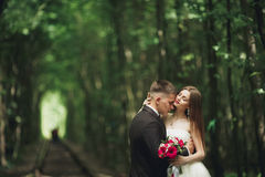 Luxury stylish young bride and groom on the background spring sunny green forest Stock Image