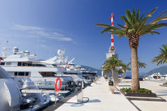 Luxury yachts and palm tree Royalty Free Stock Images