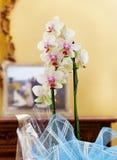 Luxuxhaus mit Orchideen. Stockfotografie