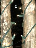 Luz, árbol, telaraña imagen de archivo libre de regalías