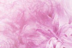 Luz abstracta floral - rosa - fondo blanco Los pétalos de un lirio florecen en un fondo escarchado blanco-rosado Primer Collag de imágenes de archivo libres de regalías