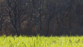 Luz abstrata na grama com fundo inoperante da árvore Imagens de Stock Royalty Free