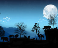 Luz africana - atmosfera azul Imagens de Stock