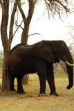 Luz alta africana foto de stock royalty free