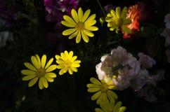 Luz amarela Fotografia de Stock Royalty Free