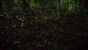 Luz amarela do voo na floresta da noite, fundo do inseto do vaga-lume de Taiwan imagem de stock
