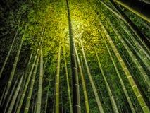 Luz até a floresta de bambu imagem de stock royalty free