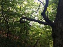 Luz através da floresta imagens de stock