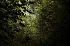 Luz através das madeiras imagem de stock royalty free
