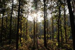 Luz através das madeiras imagens de stock