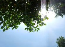 Luz através dos ramos Imagens de Stock