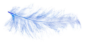 Luz - azul isolado na pena branca Fotografia de Stock Royalty Free