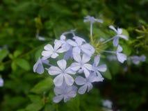 Luz - backround azul da flor fotos de stock royalty free