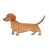 Luz - bassê marrom Ilustração do vetor do cão Fotografia de Stock Royalty Free