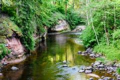 luz beautyful da manhã sobre o rio da floresta Foto de Stock