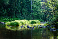 luz beautyful da manhã sobre o rio da floresta Fotografia de Stock Royalty Free