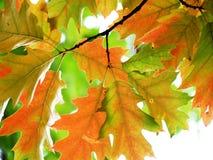 Luz brillante del otoño Fotos de archivo libres de regalías