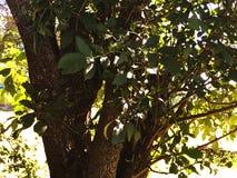 Luz brillante en árbol Foto de archivo