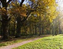 A luz cai em uma estrada de floresta Imagem de Stock Royalty Free