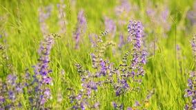Luz caliente del sol del verano que brilla a trav?s de campo de hierba salvaje metrajes