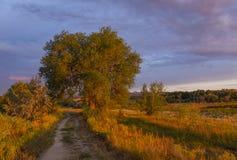 Luz caliente hermosa en los árboles y el paisaje Fotos de archivo