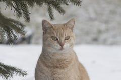 A luz coloriu o gato alaranjado para fora na neve do inverno imagens de stock