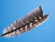 Luz como pluma Imagen de archivo libre de regalías