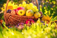 Luz completa de la puesta del sol de la hierba de las frutas de la cesta Imagen de archivo libre de regalías