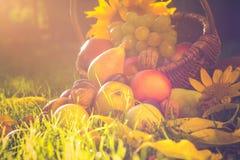 Luz completa de la puesta del sol de la hierba de las frutas de la cesta Fotos de archivo